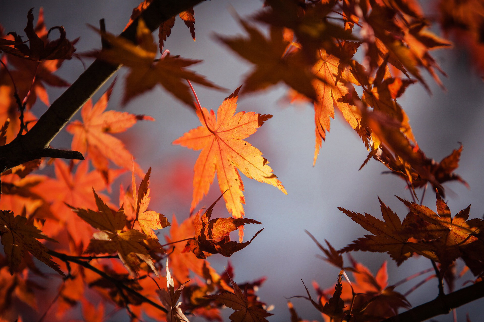 Fall-ing in love with Springfield; free and inexpensive events to attend this autumn